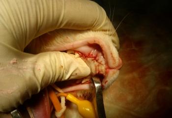 Risultato finale estrazione canino fratturato con pus